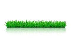 Imagen de la hierba side01 Imagen de archivo libre de regalías