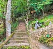 imagen de la manera larga de las escaleras al destino del bosque Foto de archivo libre de regalías