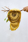 Imagen de la miel y del panal Imagen de archivo