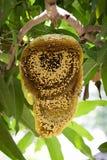 Imagen de la miel y del panal Fotos de archivo