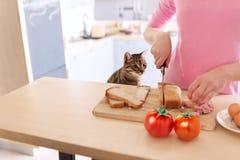Imagen de la mujer bonita joven que se coloca en cocina y que cocina el desayuno mientras que su gato que la mira Imagenes de archivo