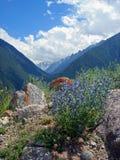 Imagen de la naturaleza con las montañas del Cáucaso y las flores azules Foto de archivo