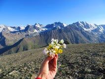 Imagen de la naturaleza con las montañas del Cáucaso y las flores salvajes Imágenes de archivo libres de regalías