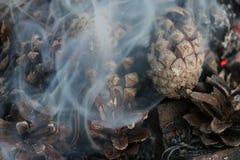 Imagen de la Navidad y del Año Nuevo postal Forest Fir Cones en el fuego Imagenes de archivo