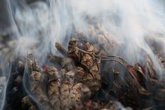 Imagen de la Navidad y del Año Nuevo postal Forest Fir Cones en el fuego Foto de archivo libre de regalías