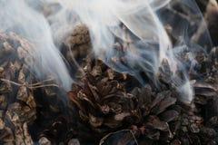 Imagen de la Navidad y del Año Nuevo postal Forest Fir Cones en el fuego Imagen de archivo