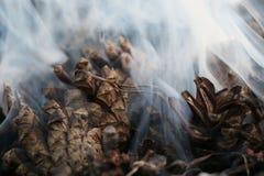 Imagen de la Navidad y del Año Nuevo postal Forest Fir Cones en el fuego Imagen de archivo libre de regalías