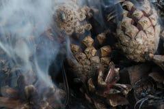 Imagen de la Navidad y del Año Nuevo postal Forest Fir Cones en el fuego Fotos de archivo