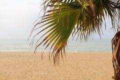 Imagen de la playa a través de las hojas de la palmera imagen de archivo libre de regalías