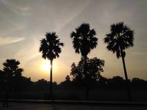 Imagen de la puesta del sol dentro de tres palmeras Fotos de archivo
