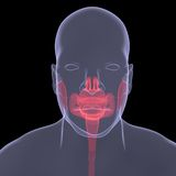 Imagen de la radiografía de una persona. Digestión dolorida Fotos de archivo