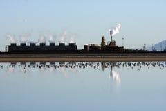 Imagen de la reflexión de la planta Imagen de archivo