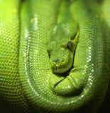 Imagen de la serpiente fotos de archivo libres de regalías