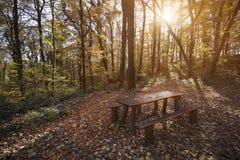Imagen de la tabla de madera con el banco en bosque Imagen de archivo