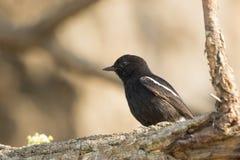 Imagen de los pájaros encaramados en la rama Animales salvajes Imagen de archivo libre de regalías