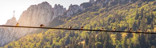Imagen de los pájaros que se sientan en una línea eléctrica con puesta del sol y mountainlandscape en el fondo foto de archivo libre de regalías