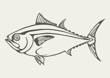 Imagen de los pescados de atún Fotografía de archivo