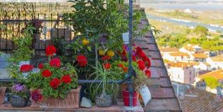 Imagen de los plantones de la flor y de frutal foto de archivo
