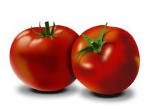 Imagen de los tomates Imagen de archivo libre de regalías