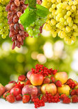 Imagen de muchas frutas en el primer del jardín Imagenes de archivo