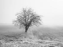 imagen de niebla blanco y negro de campos agrícolas Fotos de archivo