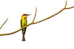 Imagen de pájaros en ramas en el fondo blanco Fotografía de archivo libre de regalías