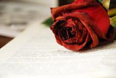 Imagen de rosas en el libro Foto de archivo libre de regalías