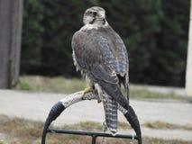 Imagen de S de un depredador que descansa en su jardín imágenes de archivo libres de regalías