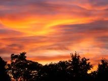 Imagen de silhouttes de árboles durante puesta del sol foto de archivo