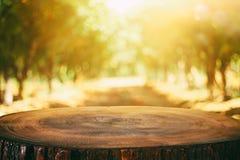 Imagen de tableros y del bosque de madera rústicos delanteros del fondo foto de archivo
