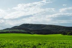 Imagen de un paisaje de un campo de la hierba verde o de trigo y de un cielo azul con los modelos de las nubes r Fotos de archivo