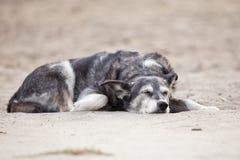 imagen de un perro el dormir imágenes de archivo libres de regalías
