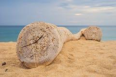 Imagen de un registro viejo en la playa blanca de la arena imagen de archivo