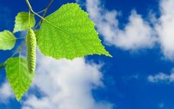 Imagen de una rama con las hojas en el primer del fondo del cielo Fotos de archivo libres de regalías