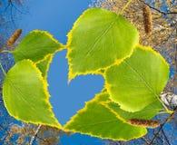 Imagen de una rama con las hojas en el primer del fondo del cielo Imagenes de archivo