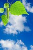 Imagen de una rama con las hojas en el primer del fondo del cielo Fotografía de archivo libre de regalías