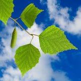 Imagen de una rama con las hojas en el primer del fondo del cielo Foto de archivo