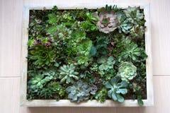 Imagen de vida de las diversas plantas suculentas fotografía de archivo libre de regalías