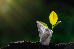 Imagen del árbol de los billetes de banco del billete de banco con la planta que crece en el top para el ahorro del dinero del fo fotos de archivo