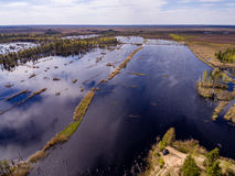 imagen del abejón Vista aérea de la zona rural Foto de archivo