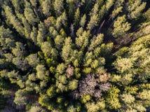 imagen del abejón Vista aérea del bosque Imagen de archivo libre de regalías