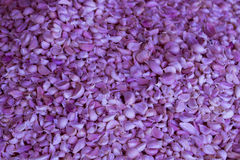 Imagen del ajo púrpura en Tailandia Foto de archivo libre de regalías