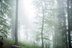 Imagen del bosque de niebla con los árboles Fotografía de archivo