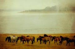 Imagen del caballo del vintage Imagenes de archivo