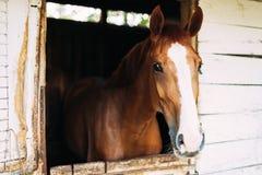 Imagen del caballo hermoso que mira a través de ventana fotos de archivo libres de regalías