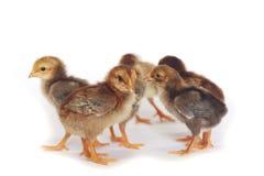 Imagen del caldo de pollo del bebé Fotos de archivo