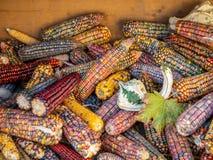 Imagen del cierre colorido del maíz encima de la visión imágenes de archivo libres de regalías
