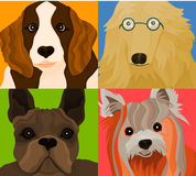 Los perros Fotografía de archivo