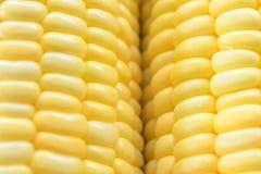 Imagen del fondo amarillo del maíz, alimento biológico sano, bio nutri fotografía de archivo