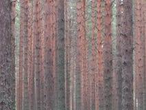 Imagen del fondo del bosque Imagen de archivo